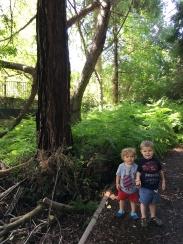 Beautiful trees on our mini hike